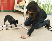 Agility Dog Training